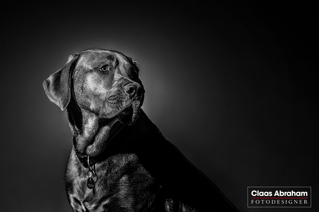 Hunde-fotos-7.jpg