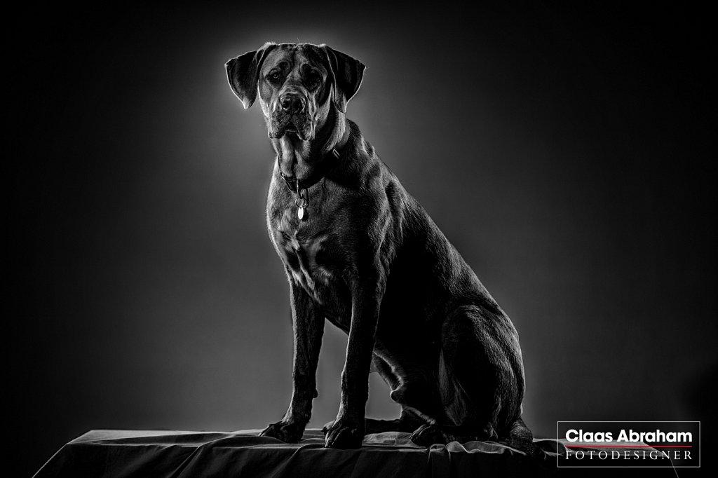 Hunde-fotos-8.jpg