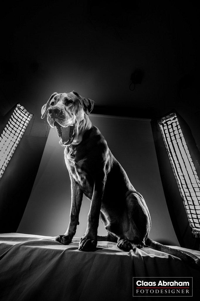 Hunde-fotos-9.jpg